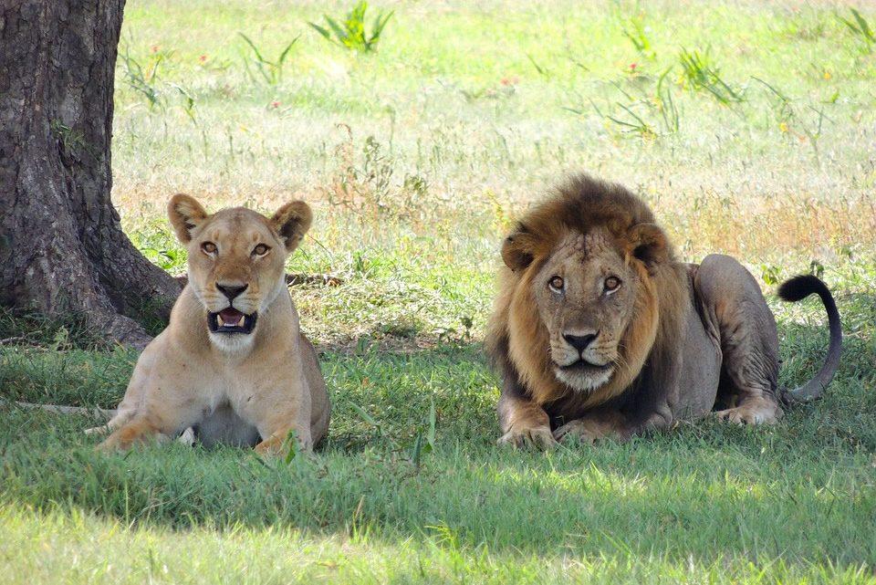 Un séjour en Tanzanie: s'aventurer dans ses parcs nationaux
